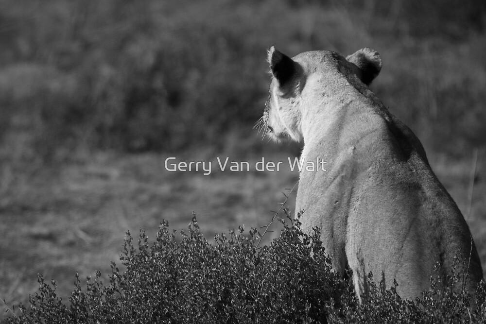 Hunting by Gerry Van der Walt