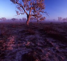 morning light - outback NSW. by Tony Middleton