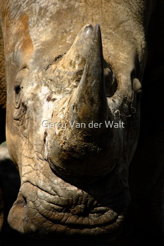 White Rhino Close Up by Gerry Van der Walt