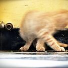 Cat play... by Louise LeGresley