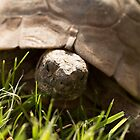 tortoise by Jagged-designs
