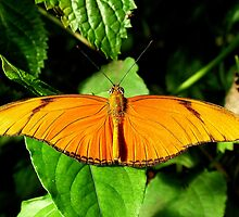 Flame Butterfly by Macky
