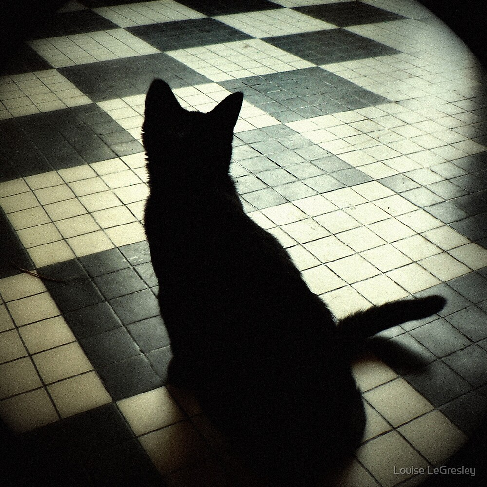 Cat shadow... by Louise LeGresley