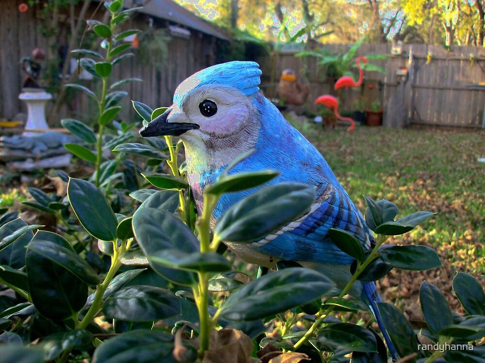 Blue Bird by randyhanna