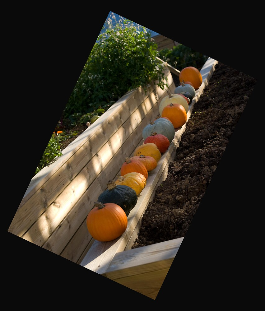 A new angle on pumpkins by John Thurgood