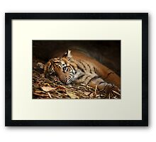 Baby Tiger - Model Framed Print