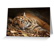 Baby Tiger - Model Greeting Card