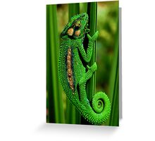 Cape Dwarf Chameleon II Greeting Card