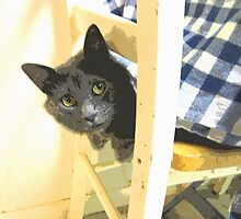 Peeking Cat by chem6a
