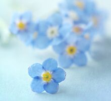 Forgetmenot blues by Jill Ferry