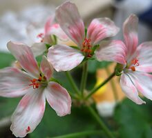 Pink & White Flowers by chem6a
