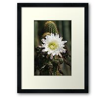 White Cactus Bloom Framed Print