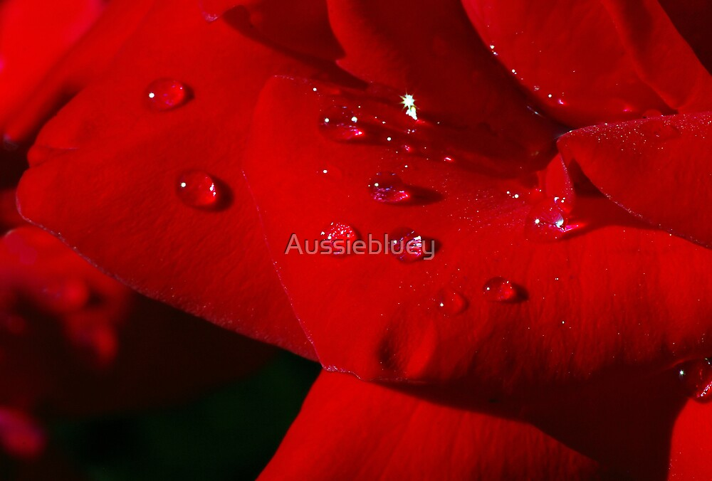 Red petals with a sparkle. by Aussiebluey