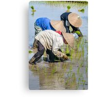 Paddy Field 2 Canvas Print