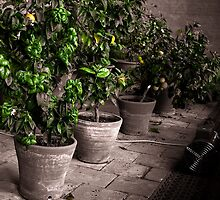 The Fruit Trees by Moonlet