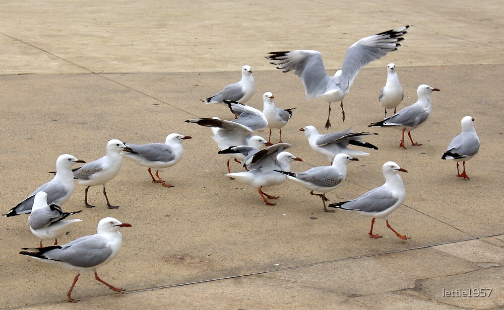 Hungry waiting Seagulls  by lettie1957