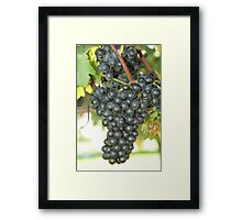 Grape2 Framed Print