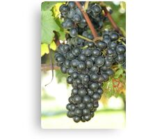 Grape2 Canvas Print