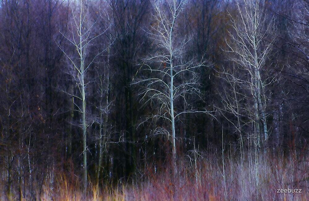 White Trees by zeebuzz