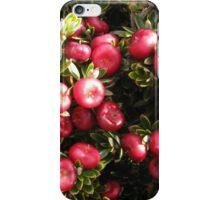 Cheeseberry on Mount Rogoona  iPhone Case/Skin