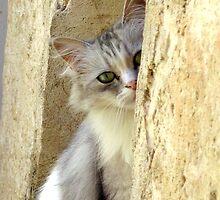 French Cat by CynthiaC