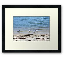 Beach Combing Framed Print