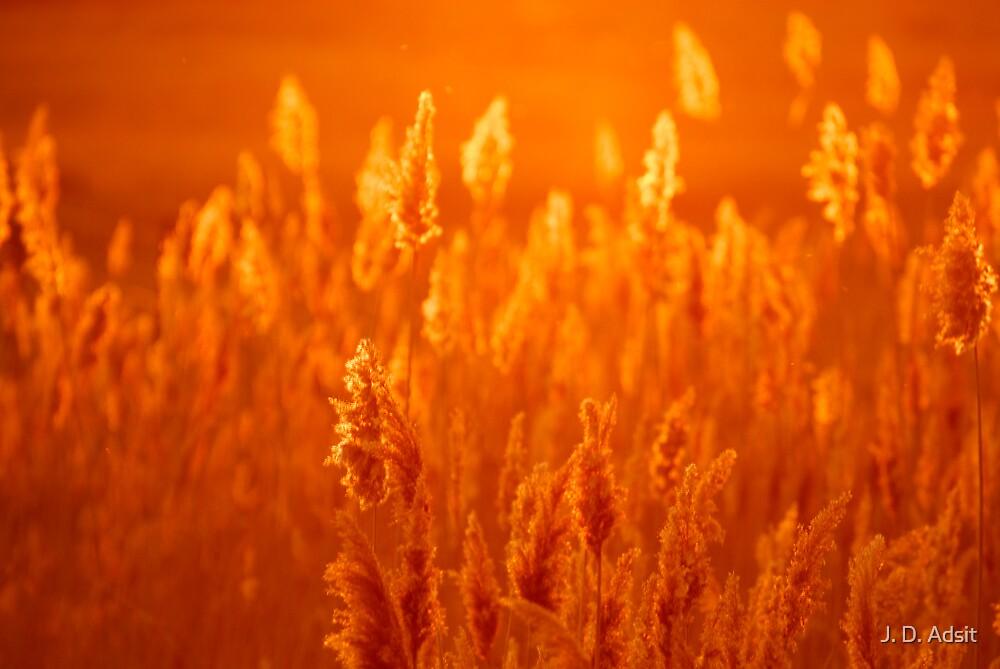 Golden Grass at Sunset by J. D. Adsit
