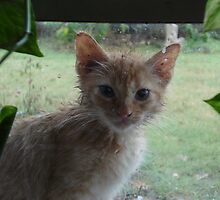 Kitten in the Rain by beautifull8706