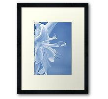 Lily in Blue Framed Print