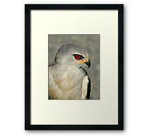 Black Shouldered Kite Framed Print