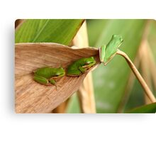 Ready to leap or Green, green, green Canvas Print