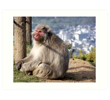 Kyoto Wild Monkey Art Print