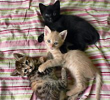 Three little kittens... by Louise LeGresley