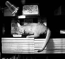 Catnap in Tokyo by Caprice Sobels