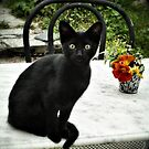 The cat and the flowers... by Louise LeGresley