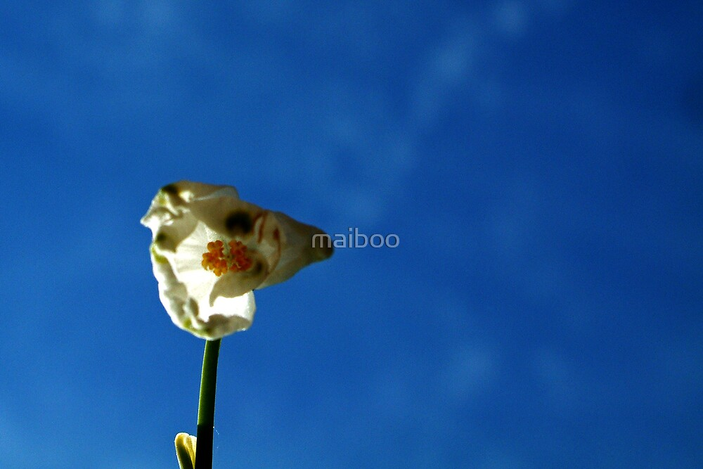 Flower up by maiboo