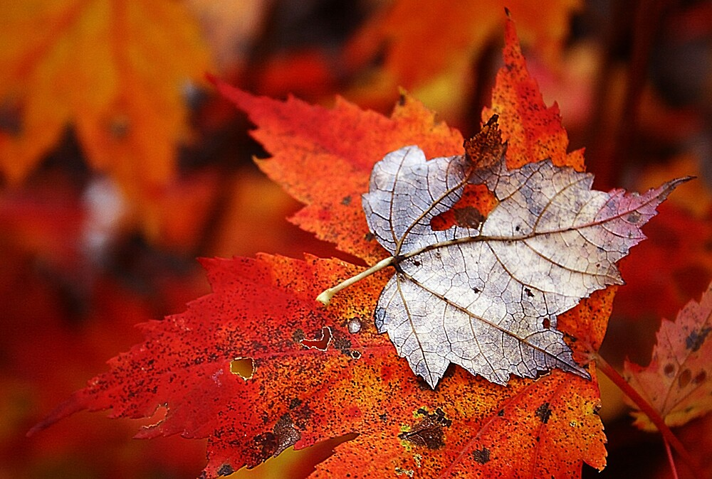 Fall by Brandy  Bartley