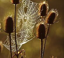 Webbed by Brandy  Bartley
