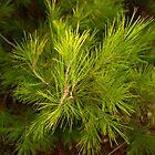 fresh pine by dominiquelandau