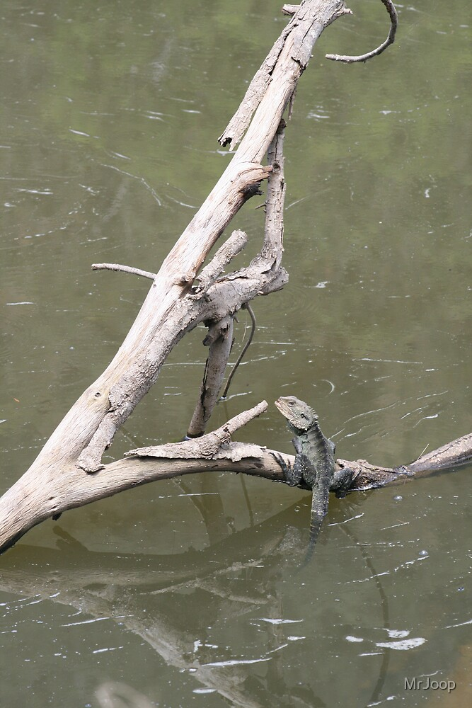 The lizard and the Wollondilly River by MrJoop