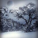 Winter  by Jacky