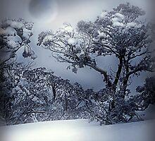 Winter  by PhotoDream Art