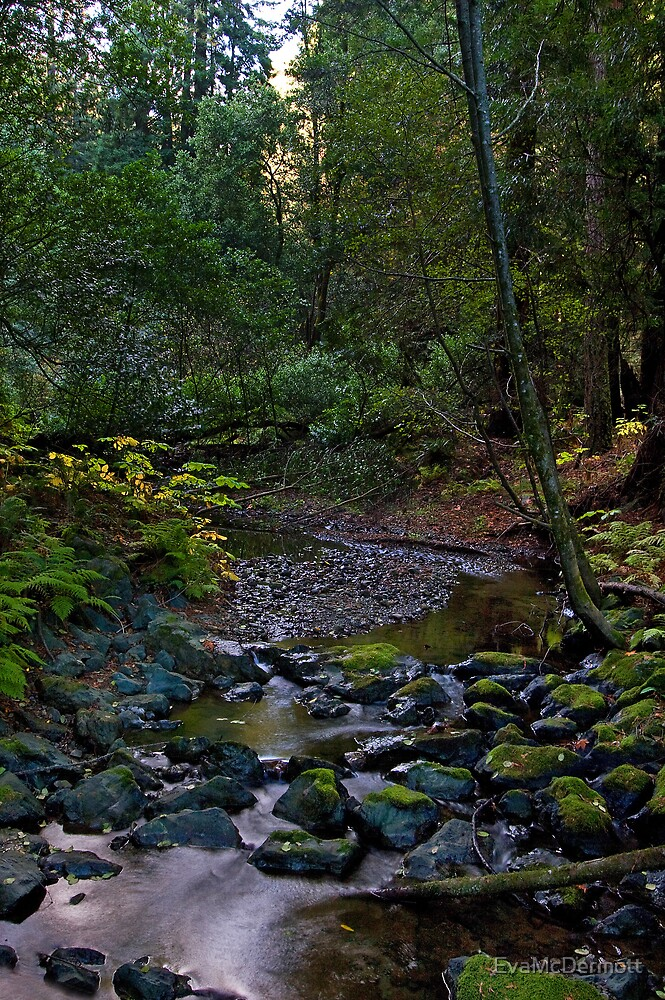 Redwood Creek by EvaMcDermott