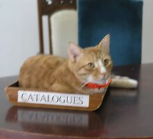catalogues by bodymechanic
