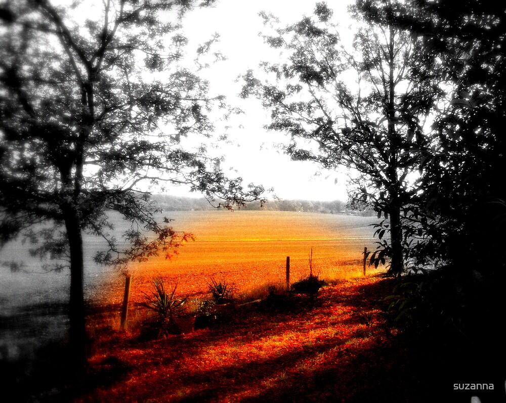 Golden Fields by suzanna