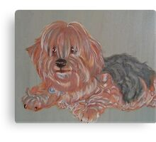 Shaggy Canvas Print