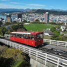Wellington from Kelburn by Mike Warman