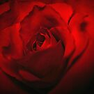 Red Red Rose by Barbara  Brown