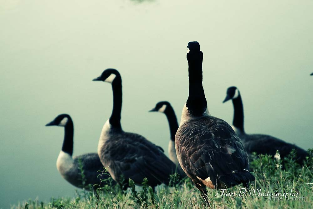 Ducks by Fariha Baloch
