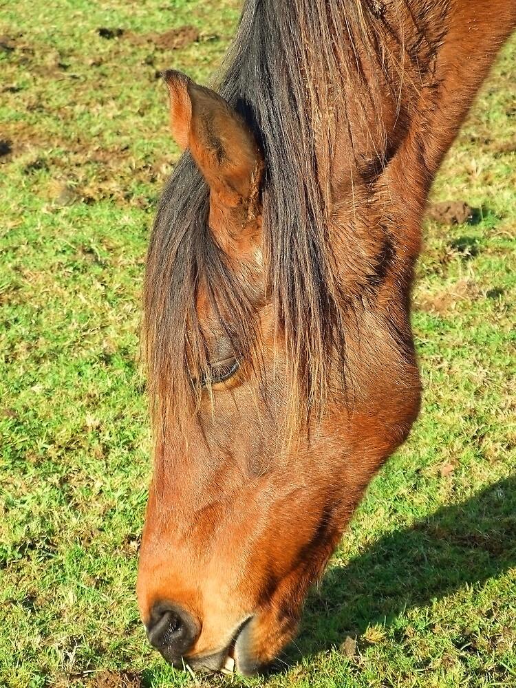 horse feeding by matjenkins